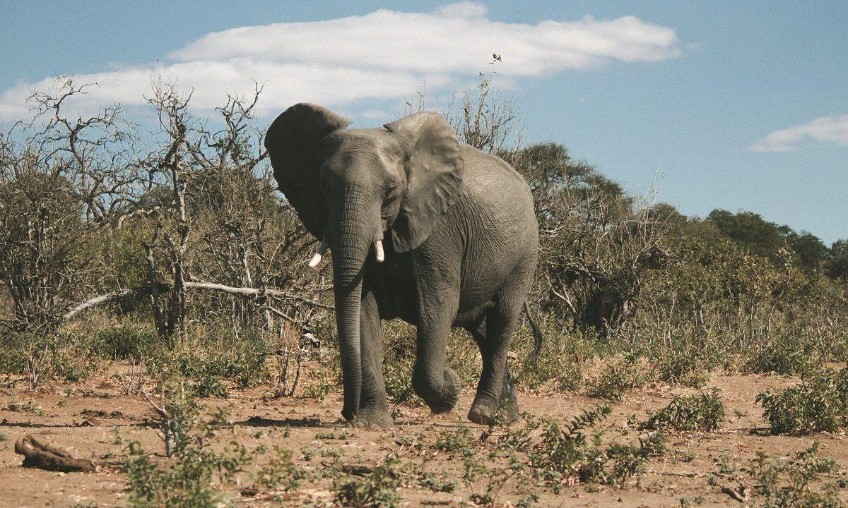 https://www.fandroid.com.pl/wp-content/uploads/botswana-1200x720.jpg